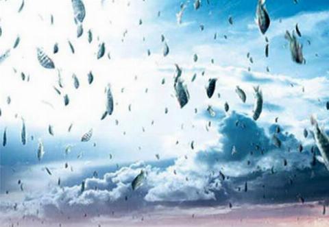 ویدیویی جالب از سقوط ماهیهای قزلآلا از آسمان به دریاچه یوتا